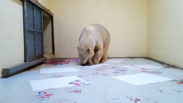 "Henry, a polar bear at the Cochrance Polar Bear Habitat, ""appears to be a talented painter,"" according to one of his former keepers."