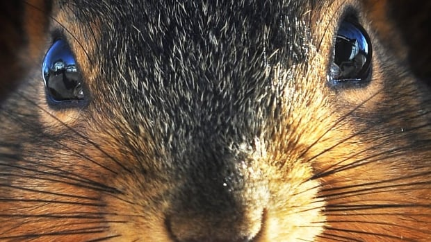 The man behind the website cybersquirrel.com says squirrels are the real threat in cyber attacks.