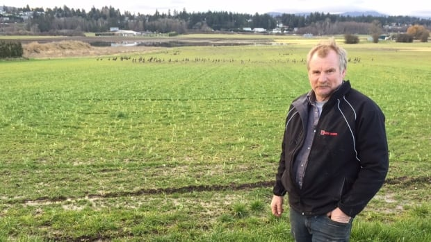 But Terry Michell, of Michell Bros. Farm in Central Saanich, said farmers are losing the battle with a growing number of birds in the region.