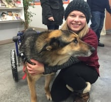 NWT SPCA worker with Sucky the dog and wheelchair