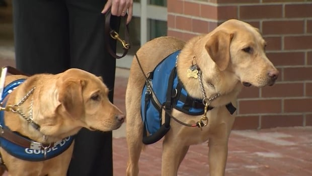 New legislation regarding guide dogs in B.C. will take effect on Jan. 18.