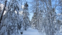 Snowy woods Nova Scotia