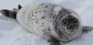 seal looks happy and healthy