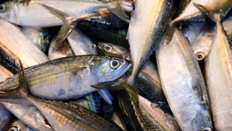 Insurance industry unknowingly supports illegal fishing, UBC researchers say