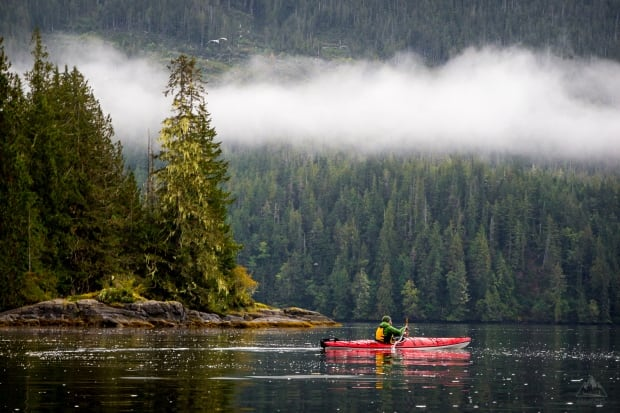 Kayaking in Great Bear Rainforest BC by Callum Snape