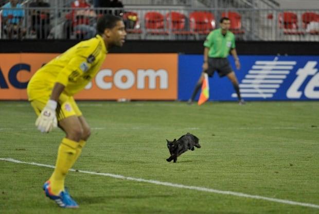 Black cat runs onto the pitch