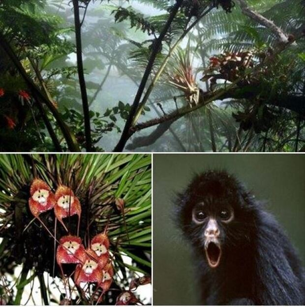 Year of the Monkey Muttart Conservatory
