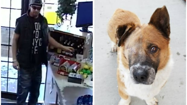 The suspect was caught on camera stealing donations intended for abandoned pets like Jon, an eight-year-old Pembroke Welsh Corgi cross missing an eye. But hey, the guy probably needed it more.