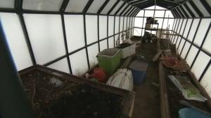 Tulita greenhouse