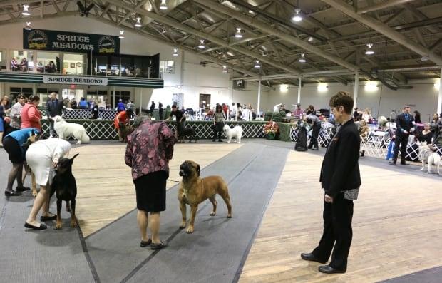 Alberta Kennel Club