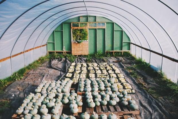 Britt Embry's farm