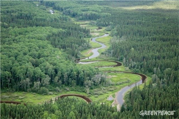 broadback river valley forest