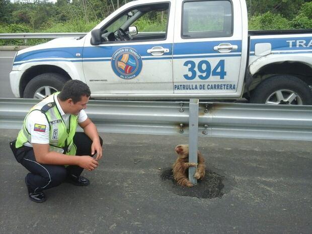 Ecuador highway sloth was found struggling to cross