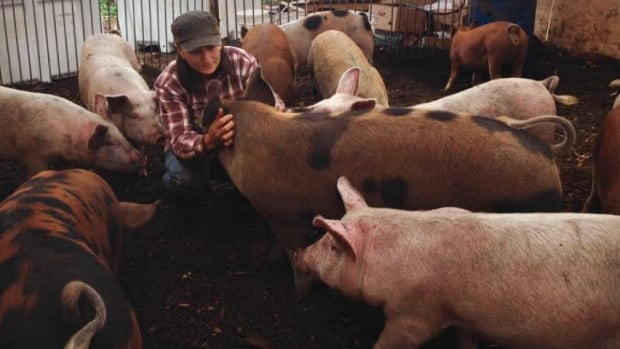 Julia Smith and Pigs