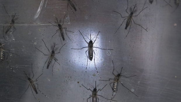 Mosquitoes that carry and transmit the Zika virus do not live in Canada due to climate and human to human transmission is rare.