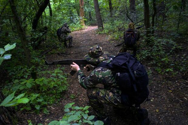 Kyiv forest