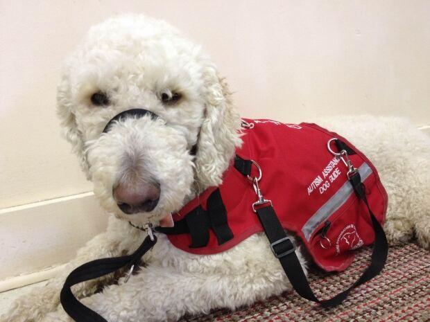 si-ethan-service-dog
