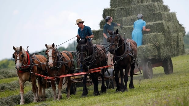 The Amish coming to the Island this spring are coming from two communities near Woodstock and Kitchener-Waterloo.