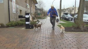 Sue Phypers walks her dogs in Kitsilano