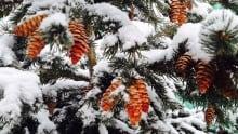Snow Winnipeg