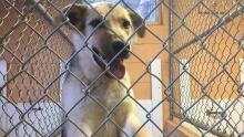 dog shelter sudbury