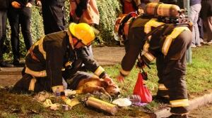 Dog thought to be dead brought back to life by Vancouver firefighters