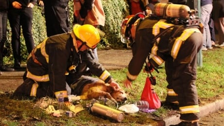 Dog thought to be dead from smoke inhalation brought back to life