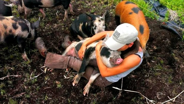 Pig Eater's Dilemma - headline