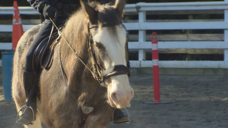 Meet Vancouver's new police horse