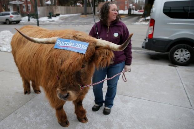 US-presidential ELECTION Bernie SANDERS steer Feb 8 2016