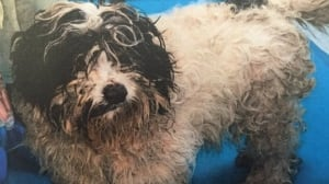 Largest puppy mill bust in B.C. history announced by SPCA