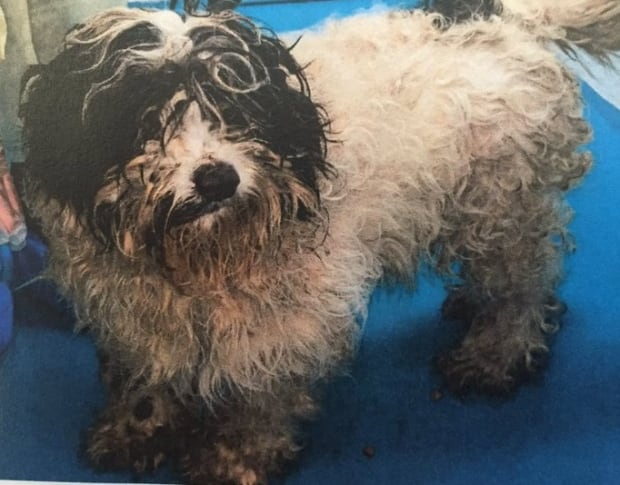 seized puppy mill dog