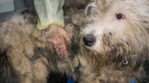 Puppy mill laws needed says B.C. SPCA