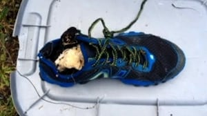 Shoe with severed foot found at Botanical Beach