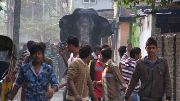 A wild elephant rampaged through an eastern Indian town on Feb. 10, smashing cars and homes, causing panicked people to run before the animal was tranquillized to be returned to the forest.