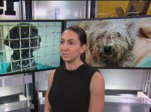 Sarah Liebl CAARE Rescue