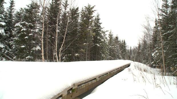 Cobb's Pond trail