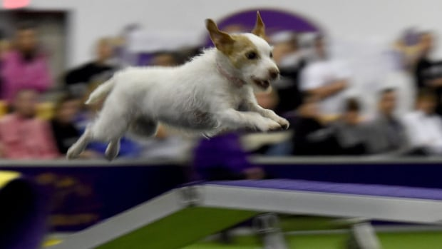 You can have your dog run an agility course at Bingemans this weekend. Don't forget to post your action shots to Facebook.