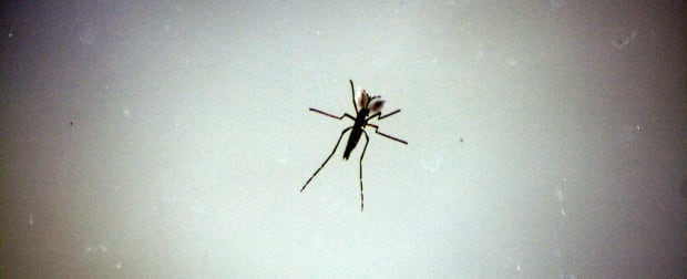 Mosquito Extinction