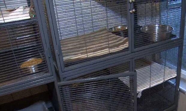 Surrey pet facility raided