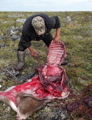 Harry Rabesca cuts caribou