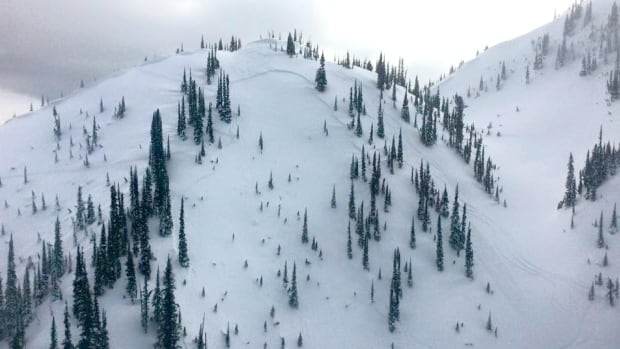 A self-guided group triggered an avalanche in the Esplanade mountain range north of Golden B.C. Feb. 21.