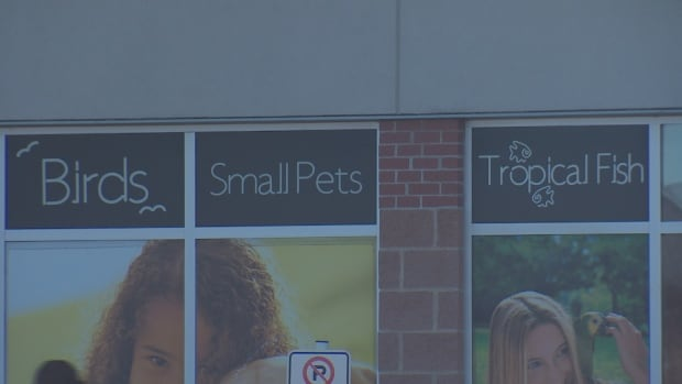 Spca say 39 multiple 39 animals seized from fredericton pets for Fish and pets unlimited