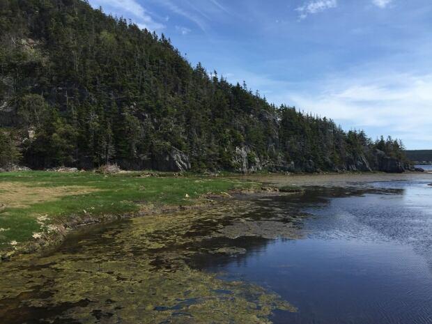 Coastal wetland Newfoundland