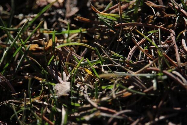 Green grass blades calgary