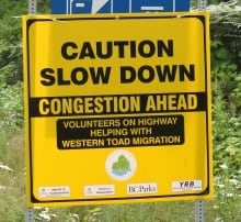 Western toad migration signs