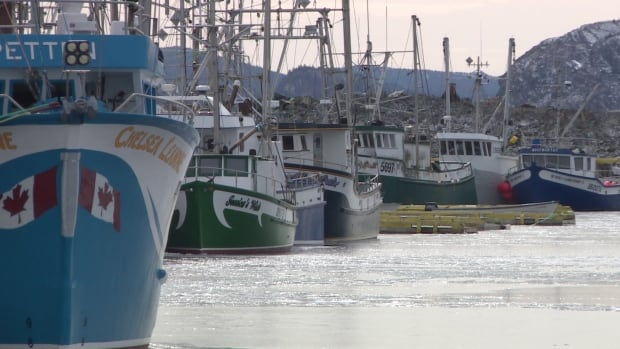 The shrimp fishery brings important revenue into coastal communities like Port de Grave.