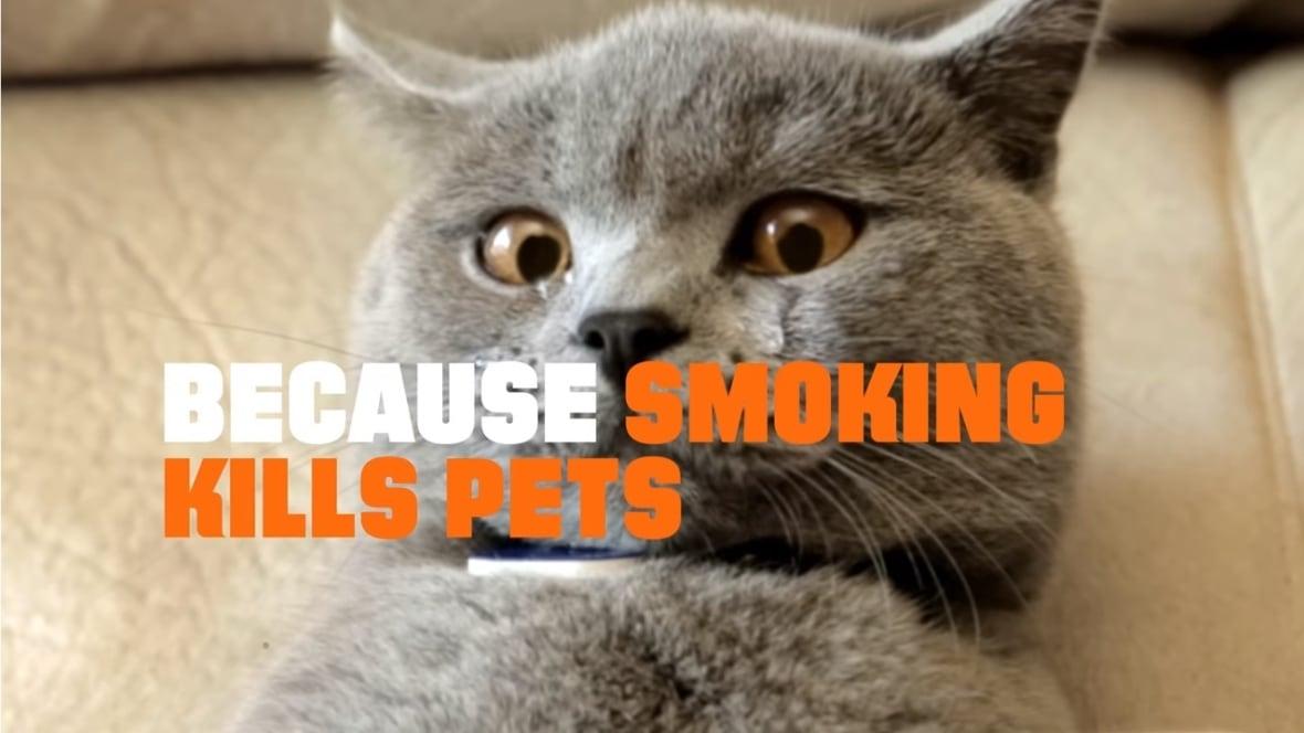 news canada british columbia kitten massage video goes viral .