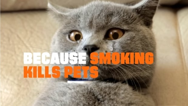 Truth Initiative's CATmageddon video warns cat owners their pets are at risk of cancer and other diseases caused by tobacco smoke.