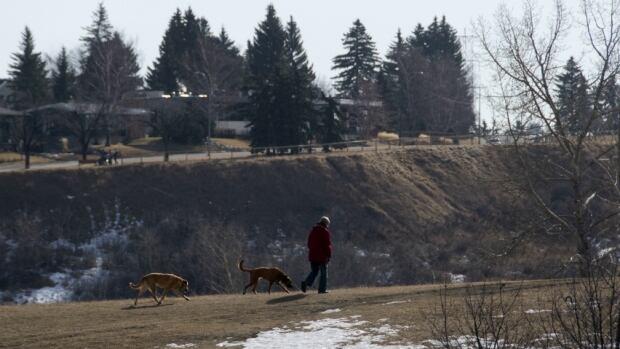 Calgary 6155 dog walk walking spring snow valley